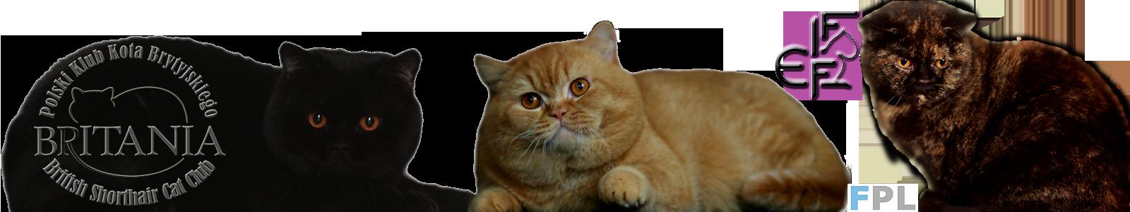 Klub Hodowców Kotów Brytyjskich Britania